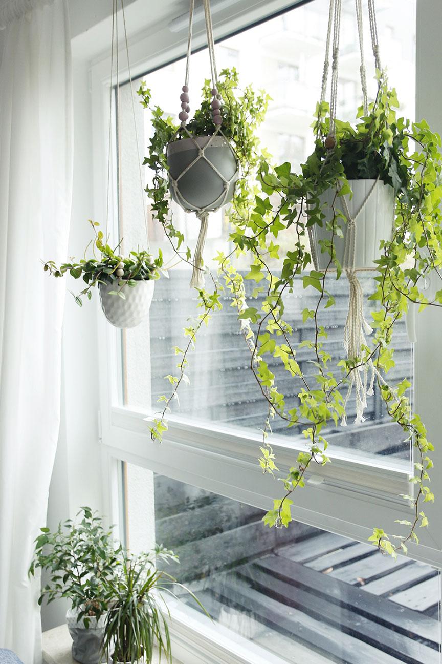 Nasze Rośliny Doniczkowe Czyli Trochę Już Umiem W Zielone
