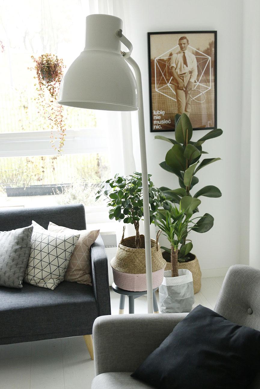 duże rośliny w domu