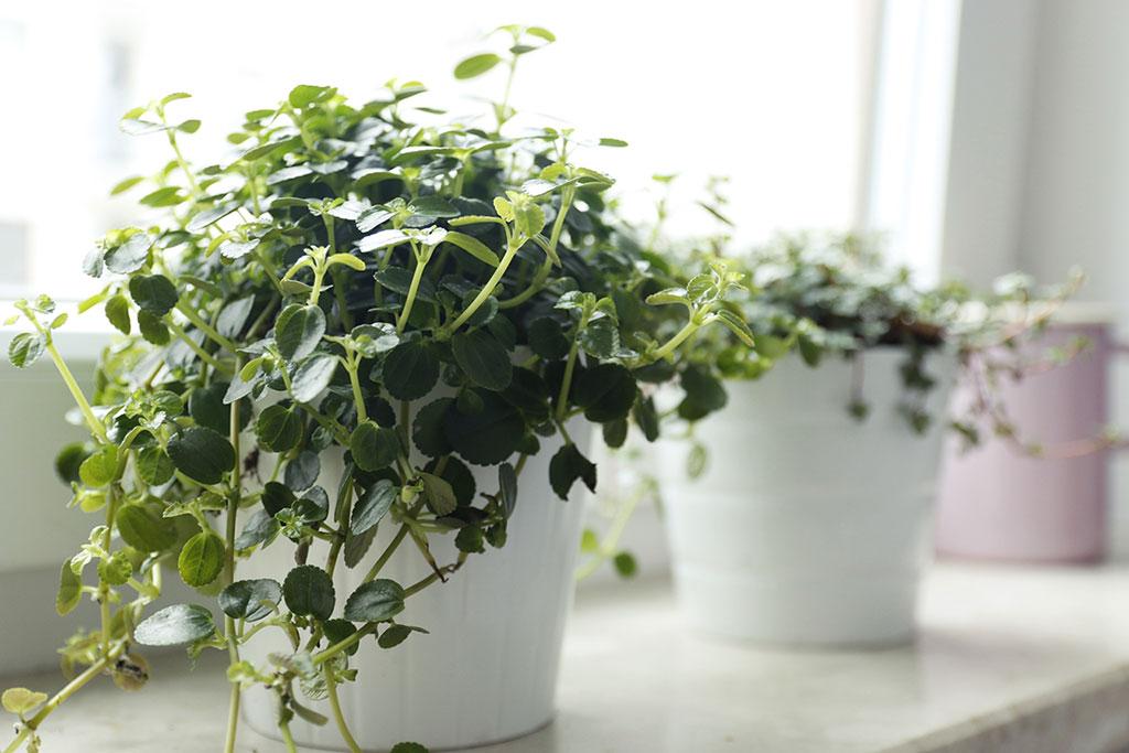 drobne rośliny doniczkowe