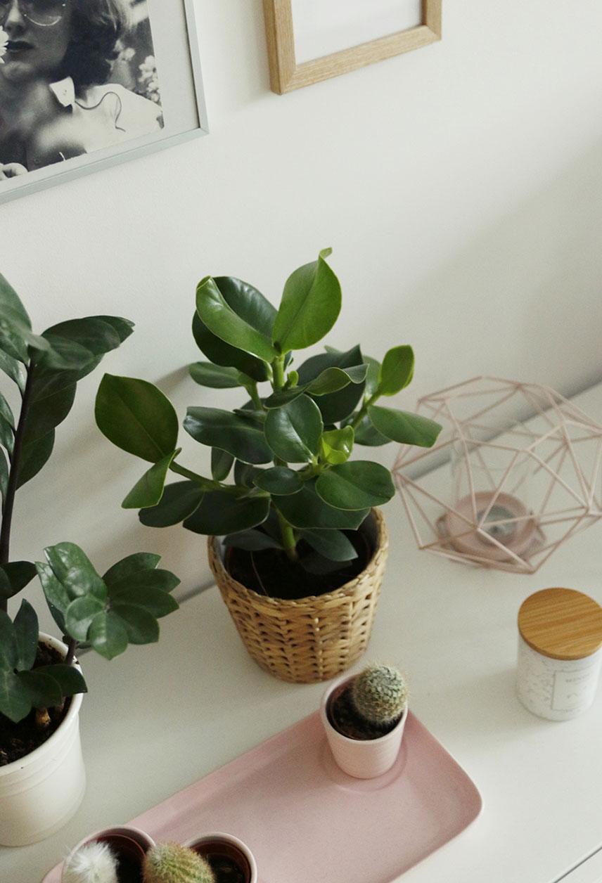 ikea rośliny