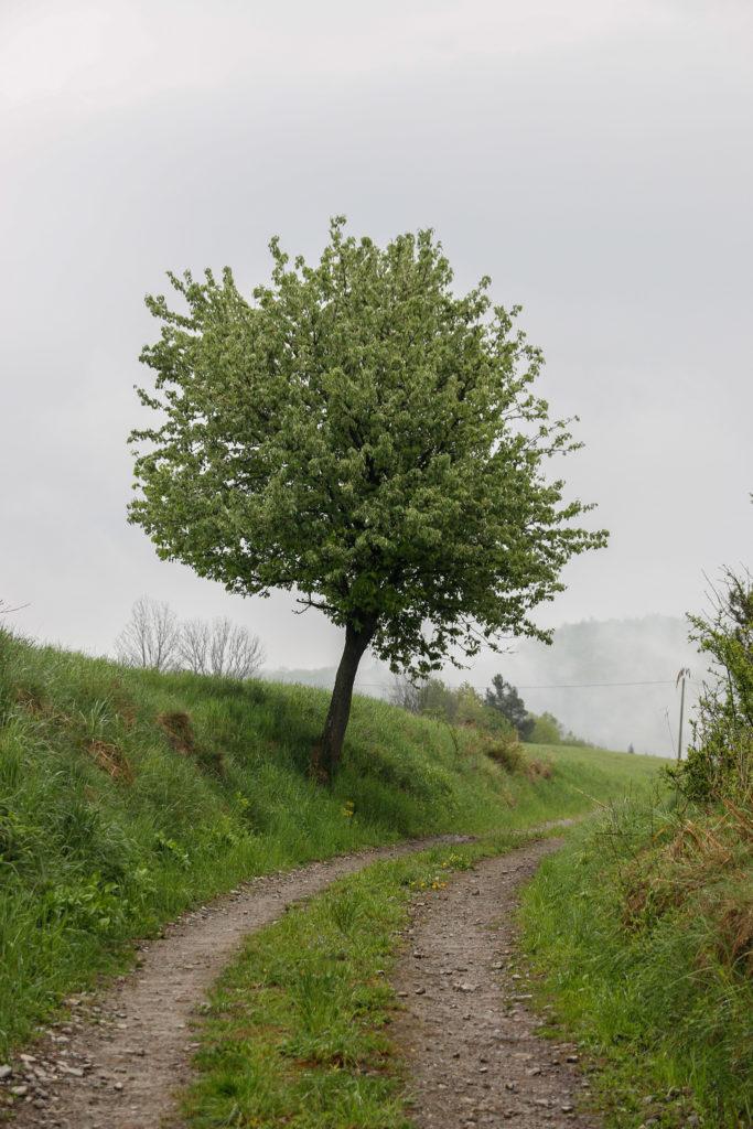 drzewo przy drodze
