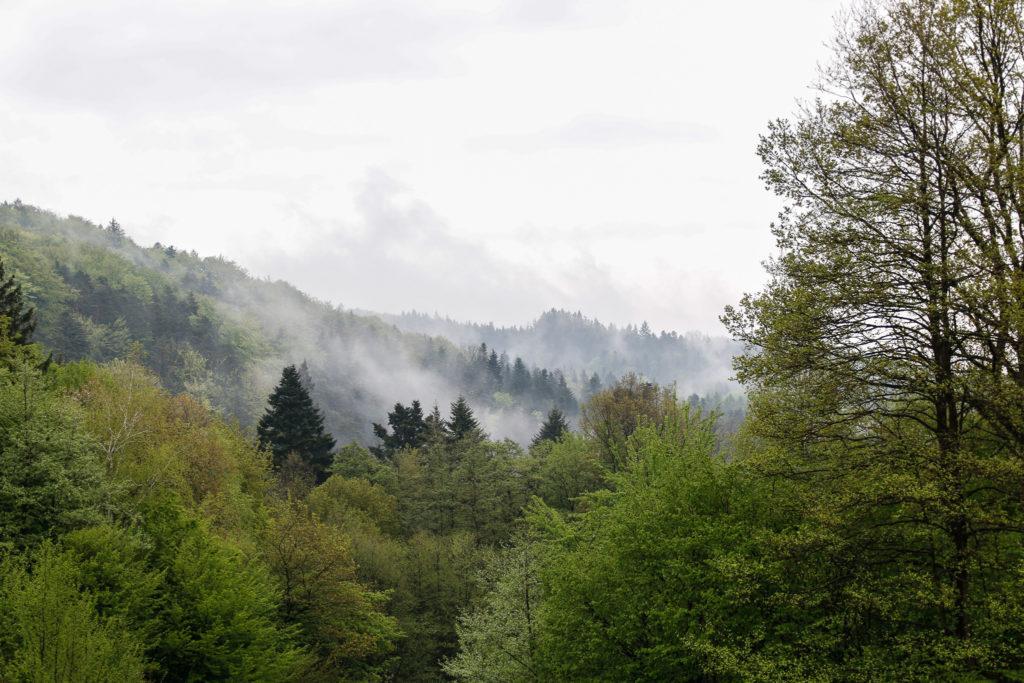 mgły nad lasem
