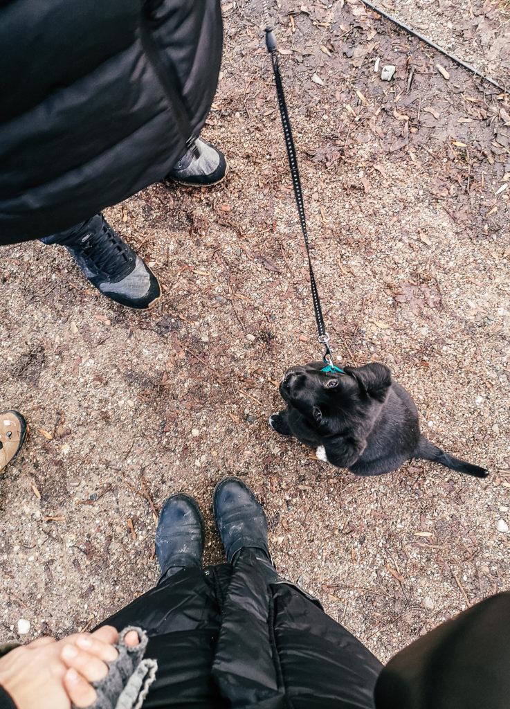 szczeniak na spacerze