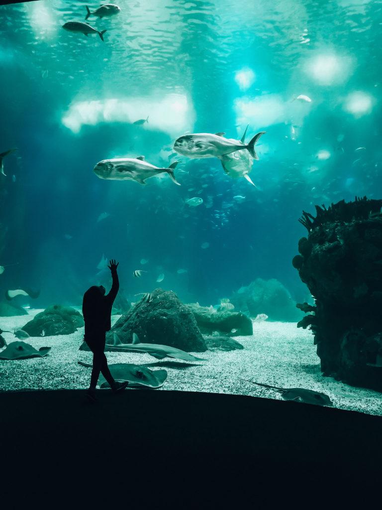 Oceanarium Lizbona