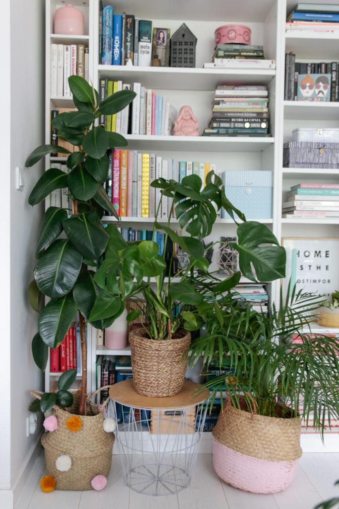 duże rośliny doniczkowe