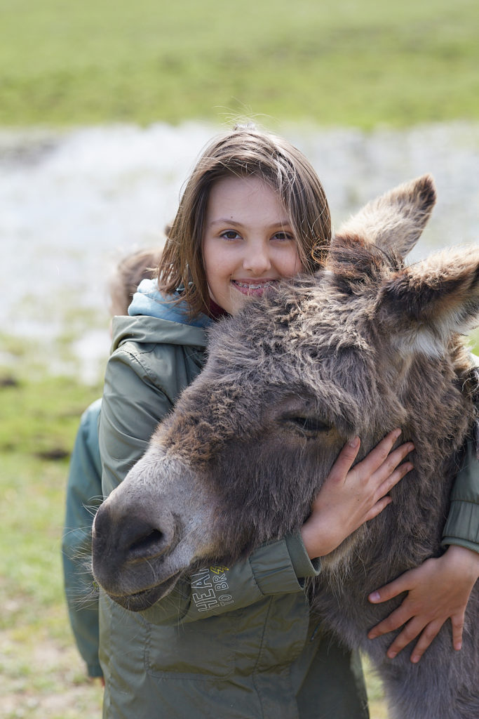 adopcja zwierząt