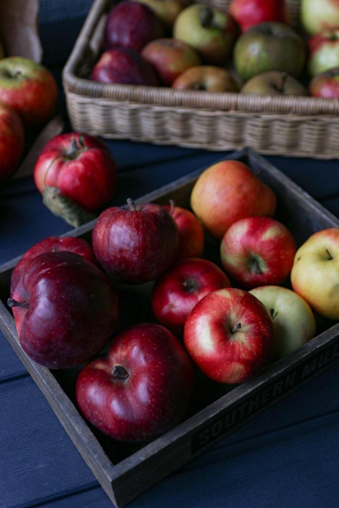 odmiany jabłek